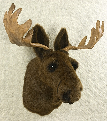 42 best images about taxidermy real faux on pinterest weather vanes deer and shabby chic - Fake moose head mount ...