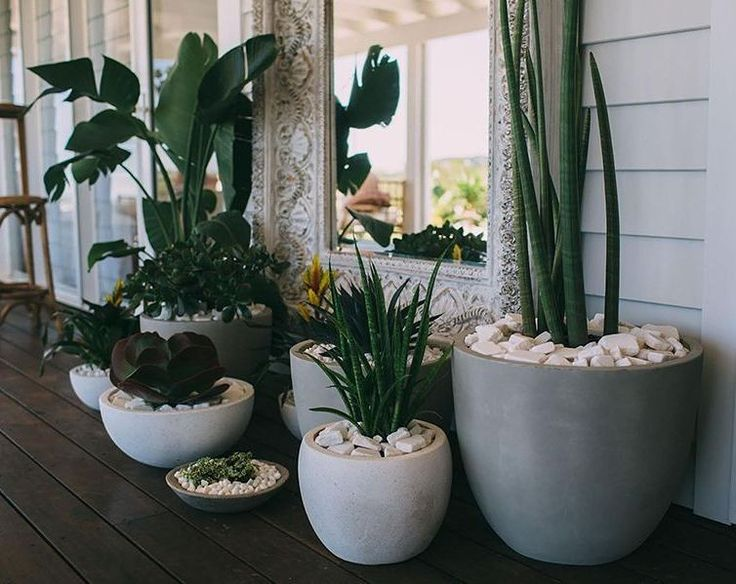 Excellent collection of matching pots with plants. Take notice of the mirror behind them all.  Gives an image of baulk with the reflection and distance.  #outdoors #plants #collection of #pots from @Pinterest. ⚘ #decorator #design #landscaping