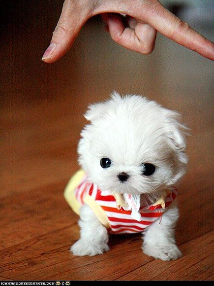 "itsy bitsy puppy => SOURCE: @Bendrix ""Furry Kidlings .ME"" Board via."