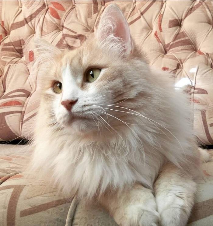 38 Best Cream Colored Cat Names | Cat Names | Cat names