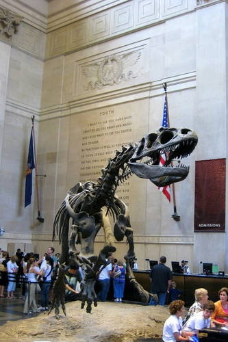 T-Rex at the American Museum of Natural History in New York City.