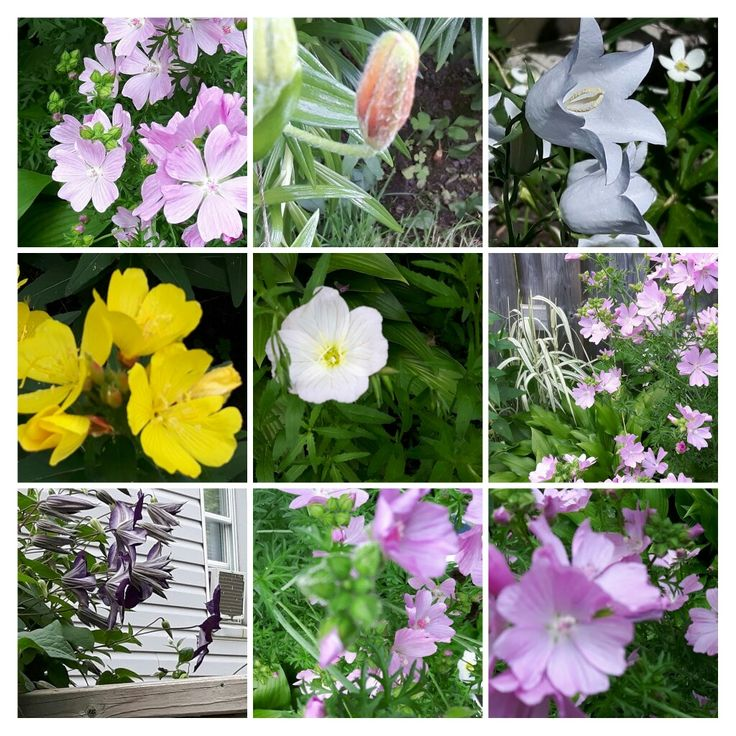 Assortment of my garden flowers!