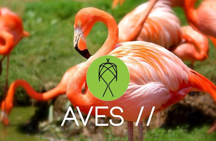 Introducing our new Tribes! Aves Tribe// Choose your Tribe!  #Birds #Aves #BirdTribes #trimamuthtribe #design