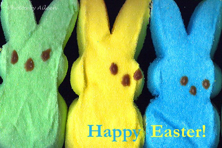peeps card, Happy Easter card, bunny Easter card, rabbit peeps, Easter photo by PhotosbyAileen on Etsy