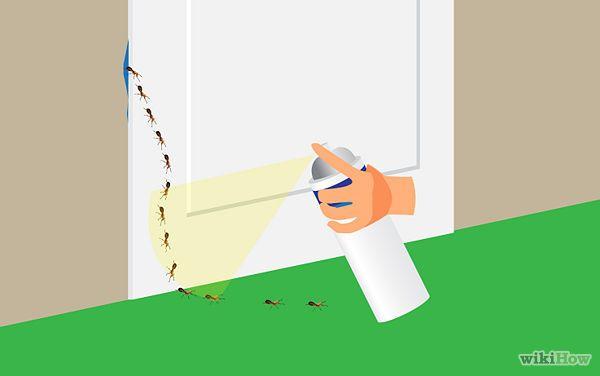 Kill Sugar Ants - wikiHow