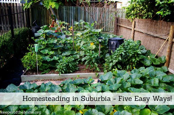 When you think of homesteading – you probably picture nice fields, a farm house, barn, etc – and that you can't be an independent homesteader because you live in suburbia. Never fear! Here's five easy ways to start homesteading in suburbia.