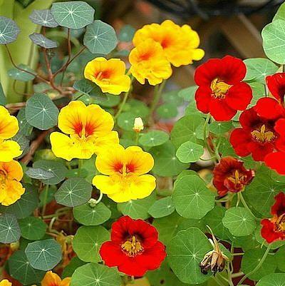 Planten om slakken te weren - slakken bestrijden met planten die slakken niet eten