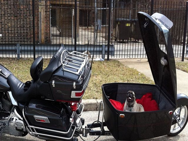 Ways To Select A Motorcycle Dog Carrier 1 Bikes