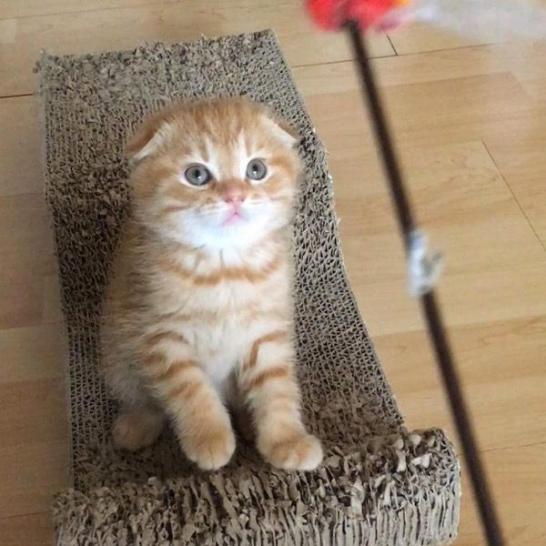 Meet Benny the kitten! Benny has caused quite a stir on Instagram...