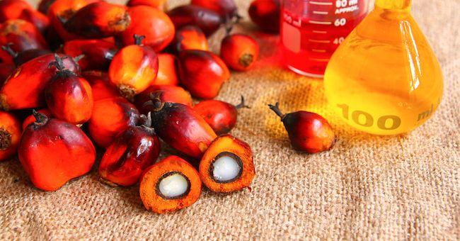 Olio di palma: non fa male secondo l'Istituto Superiore di Sanità