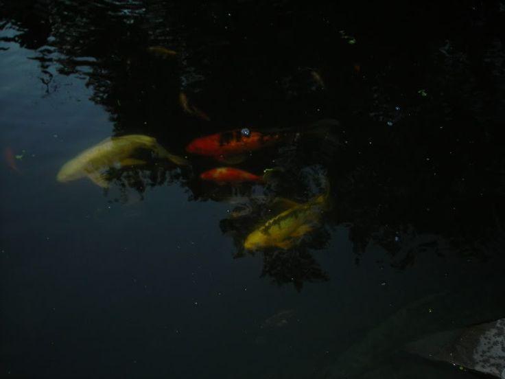 128 Best Images About Garden Ponds On Pinterest