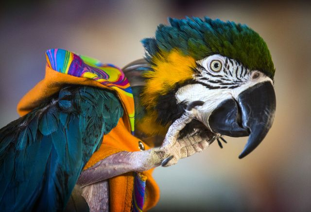 Parrot rescue works to educate public about long-lived, intelligent birds