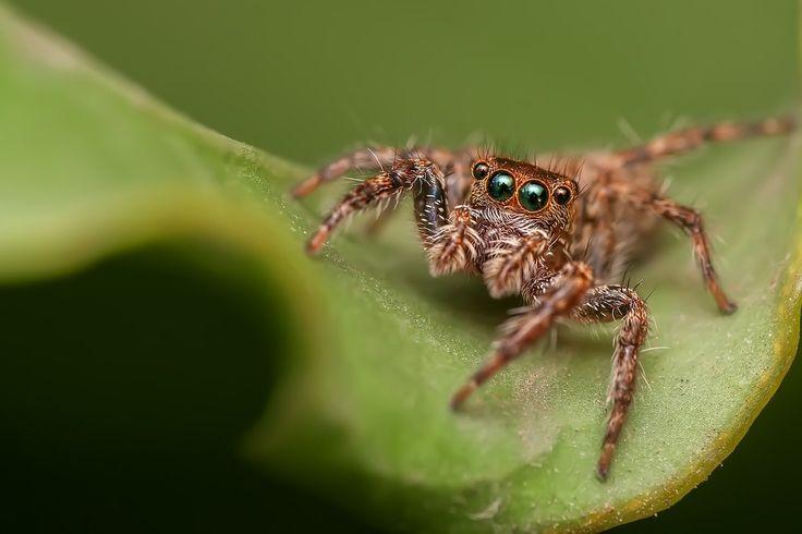 A pók igencsak hosszú történettel bír a kultúrákban. Ősi szimbóluma a mágiának, misztériumoknak, erőnek, növekedésnek, s az időnek. A pók és a hálója emlékeztet minket arra, hogy minden döntésünk és választásunk kihat az életünkre./ Szimbólumok/Állatszimbólumok: Pókok~ ezotéria, spiritualitás, szimbólumok, állat szimbólumok, állat szimbolika, pókok, jelképek,  fényörvény, pók szimbólum, pók jelkép, pók jelentése, pók misztériuma,