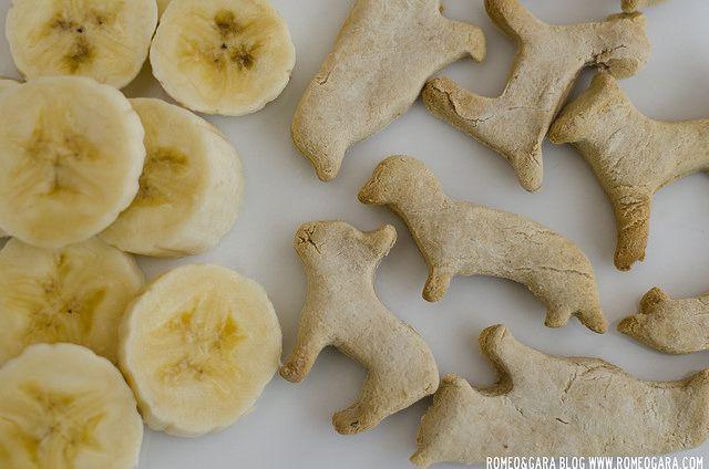 Fáciles, ricas y muy crujientes, así son las galletas caseraspara perros que vamos a hacer en esta entrada. Si no eres muy manitas en la cocina, no te preocupes,realmente son muy sencillas de hac...