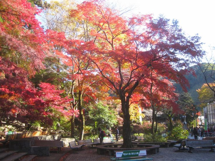 Autumn Leaves at Mount Takao