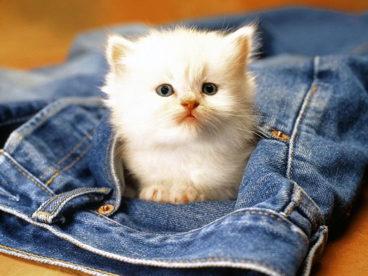 Kitty in a pocket ♥