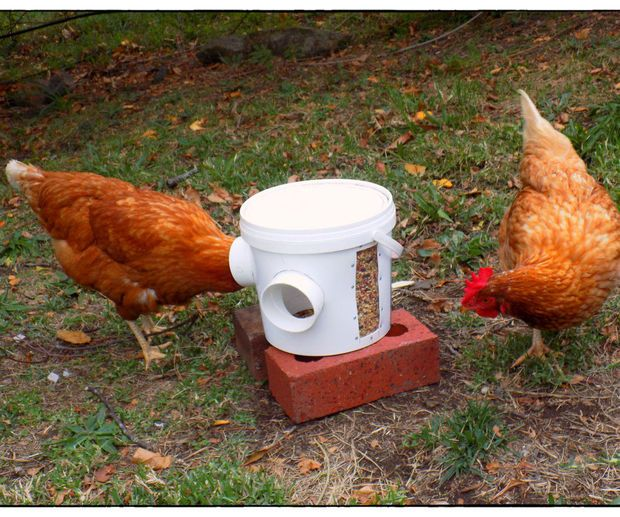 Super Simple Chicken Feeder: 1.  medium sized bucket. It must have a lid. . 2. 2 x 70mm PVC elbows.  3. Hot glue or silicone. Add a window to see how much grain is left.  1. Clear piece of plastic 2. Rivets Tools  1. Stanley knife  2. 70mm hole saw  3. Drill  4. Rivet gun  5. Hot glue gun