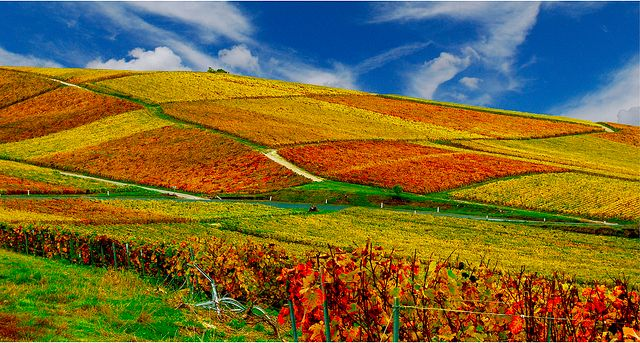 The countryside, wine trail tours & vineyards of Champagne-Ardenne in France