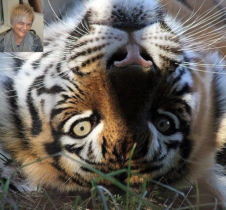 Irča a tygr