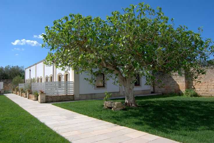 External..The old fig and rooms #room #country #relax #masseria #country #resort #puglia