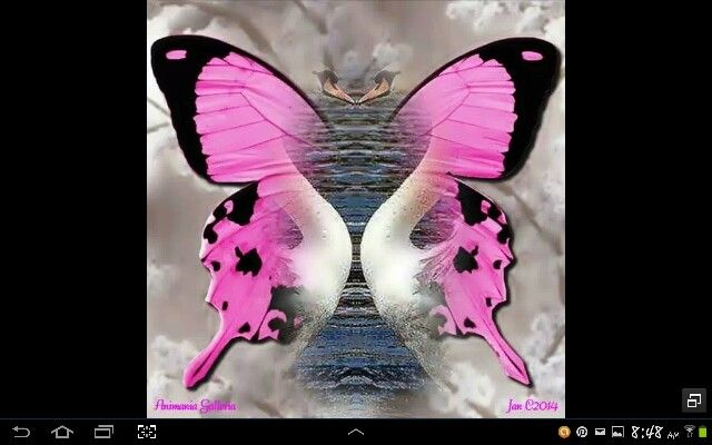 Awesome!  Combination of a butterfly and 2 swans!
