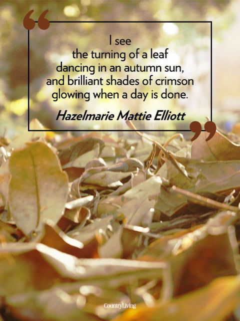 23 Fall Quotes - Sayings About Autumn