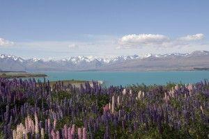 Lake Tekapo Lupin Wedding Package
