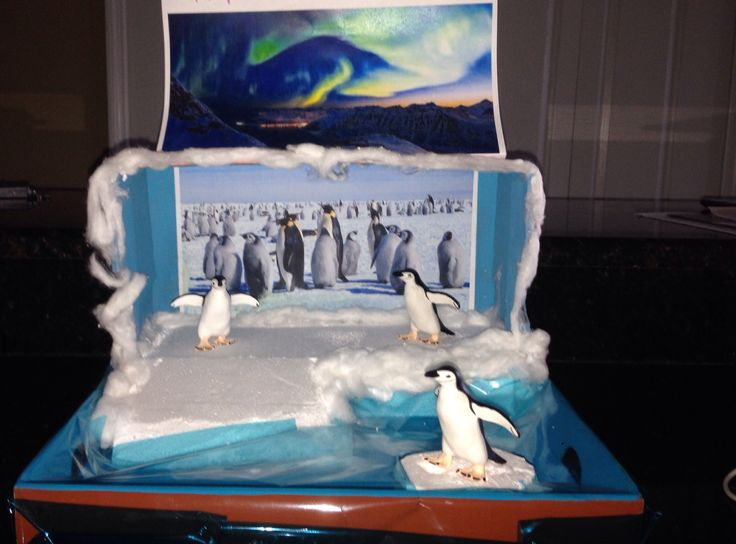 Penguin diorama kids pinterest penguins and dioramas for Penguin project