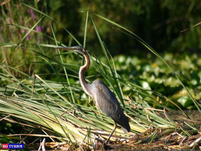 Delta Dunarii este paradisul entuziastilor faunei salbatice