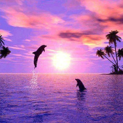 Dolfijnen energie