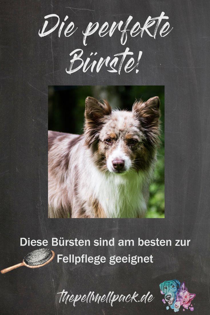 Welche Bürste ist die perfekte für meinen Hund? -- Hunde   Fellpflege   Unterwolle   Unterfell   Hundebürste   Pflege Hunde   thepellmellpack.de
