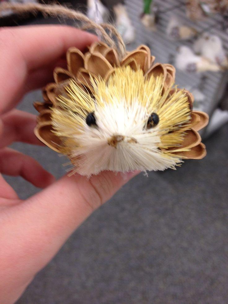 pinecone hedgehog  human being and animal  grade 4