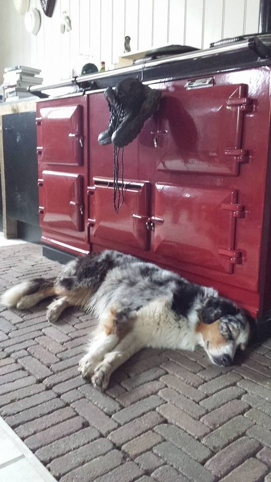 I love Collie-type dogs (this is a Blue Merle Australian Shepherd) and Aga stoves - this pin has both - yay!