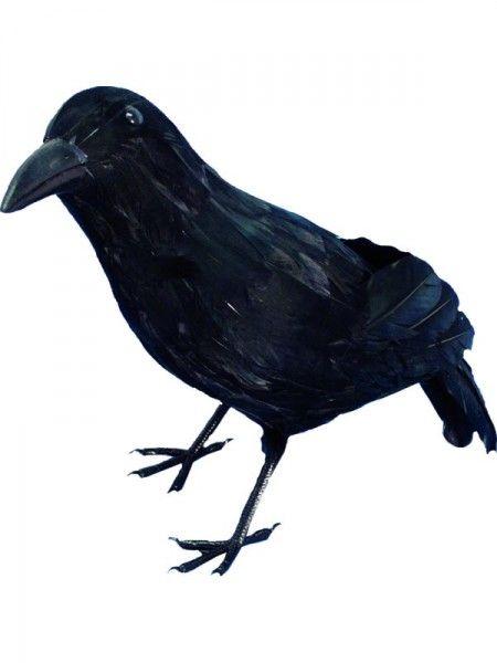 Czarny kruk pomoże stworzyć magiczny, andrzejkowy klimat
