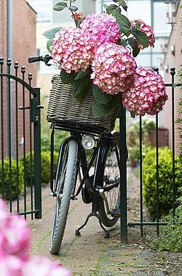 ♥: Spring Flowers, Wicker Baskets, Flowers Centerpieces, Pink Hydrangeas, Bike Riding, Old Bike, Flowers Baskets, Bike Baskets, Vintage Bike