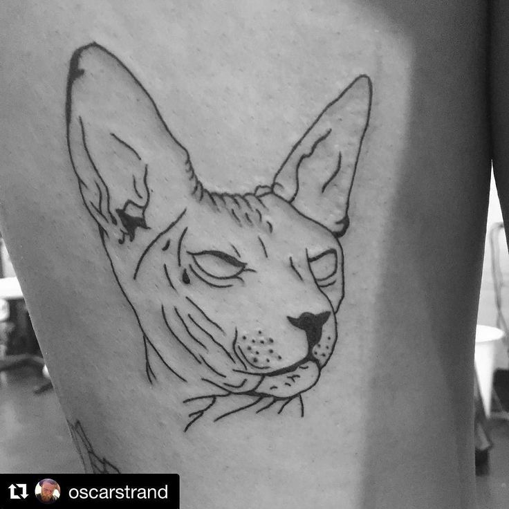 If you'd like a 'cattoo' we can warmly recommend @oscarstrand. #kattattoo #cattoo #katt #tattoo #stockholm #thecatcornerstockholm #sphynx #sphynxtattoo #cat #catstagram #catsofinstagram #södermalm #instacat #catcafe #cafe