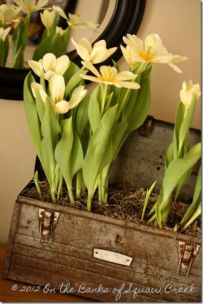 Love this: Gardens Ideas, Old Tools Boxes, Toolbox Pretty, Toolbox Planters, Squaw Creek, Old Tool Boxes, Spring Fever, Wooden Boxes, Growing Tulip