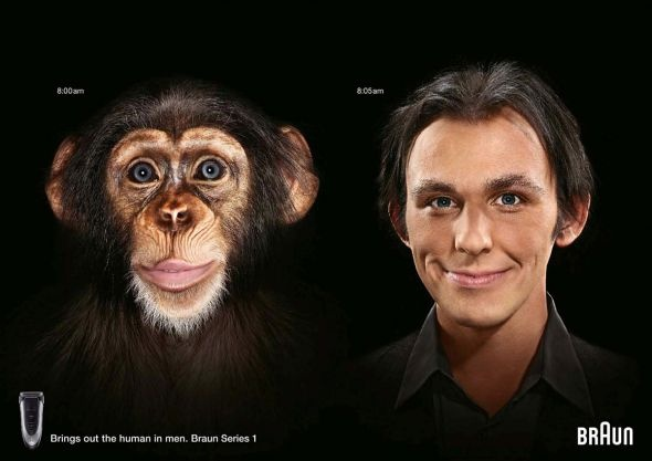 braun - monkey