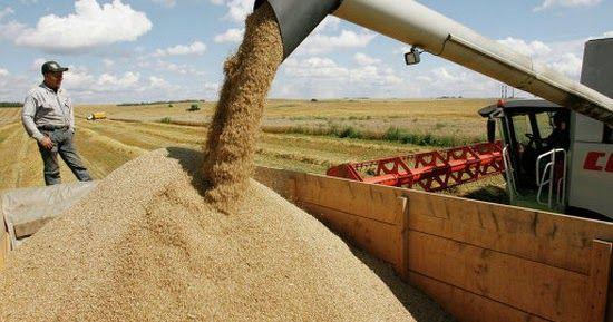 Российский союз мукомольных и крупяных предприятий оценивает дефицит  продовольственной пшеницы 3-го класса, необходимой для получения...