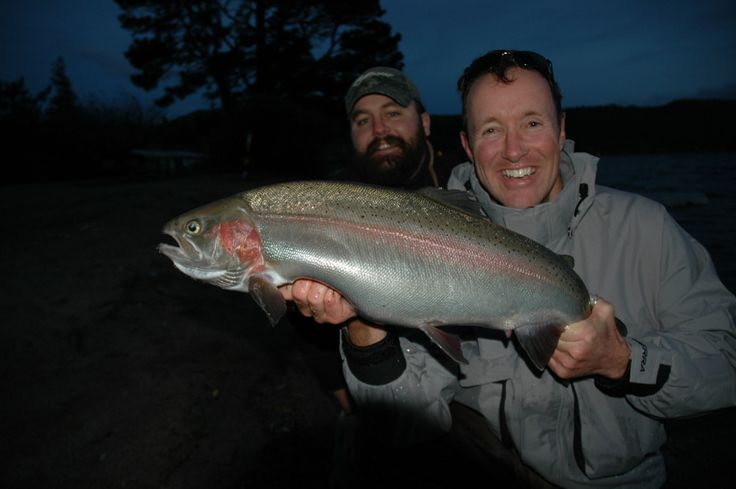 Trophy Rainbow trout caught at dusk from a stillwater not far from Taupo.