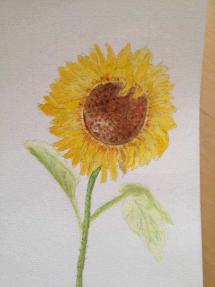 Zonnebloem. Waterverf en potlood Sunflower, aquarel and pencil augustus 2016