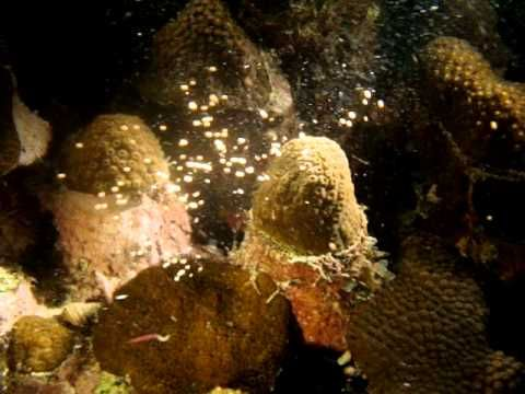 Magic under water @ Isla de Rosario, Produced by Diving Planet #Cartagena #Colomia.