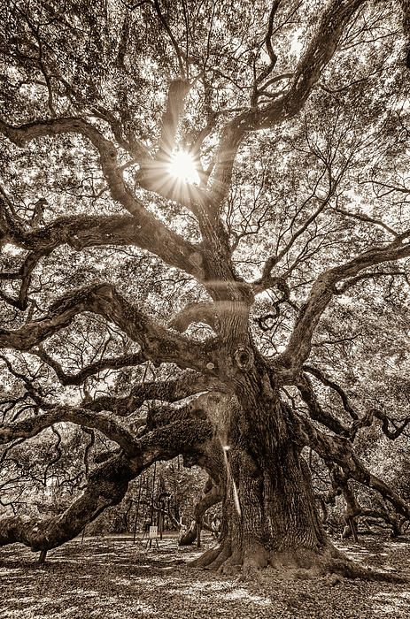 best 25 oak tree tattoo ideas on pinterest tree roots tattoo roots tattoo and tree tattoos. Black Bedroom Furniture Sets. Home Design Ideas