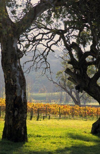 The Vineyard at Bird in Hand, Adelaide Hills, South Australia