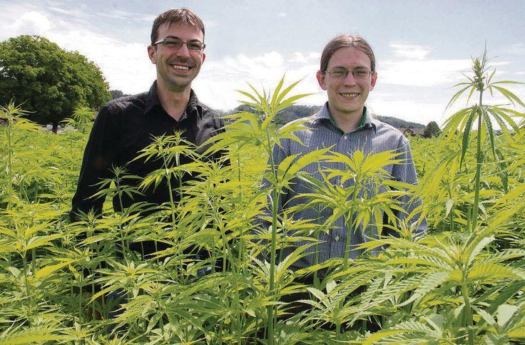 Dem Cannabis verfallen - Im vergangenen Oktober 2014 gegründet, ist der auf Cannabisprodukte spezialisierten Thurgauer Medropharm GmbH mit Hanfpulver bereits der Sprung nach Kanada geglückt schreibt das St. Galler Tagblatt. Mike Toniolo (links), Geschäftsführer und Partner der Medropharm AG, und Oliver Tschäppät, Leiter Forschung & Entwicklung und Partner. www.medropharm.ch #medropharm #cannabis #mezidin #thc #cbd #marihuana #cannabismedizin