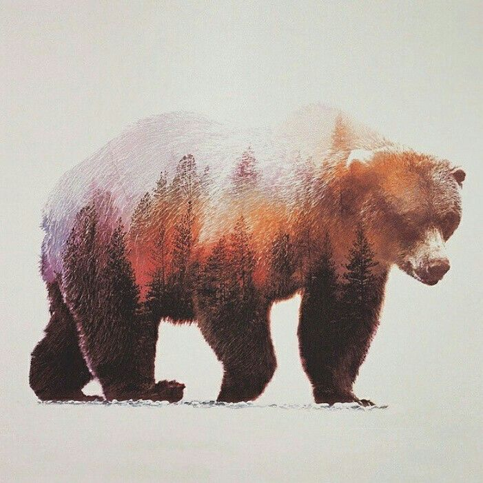 Wall decoration. Brown bear #landscape by Andreas Lie @artbylie