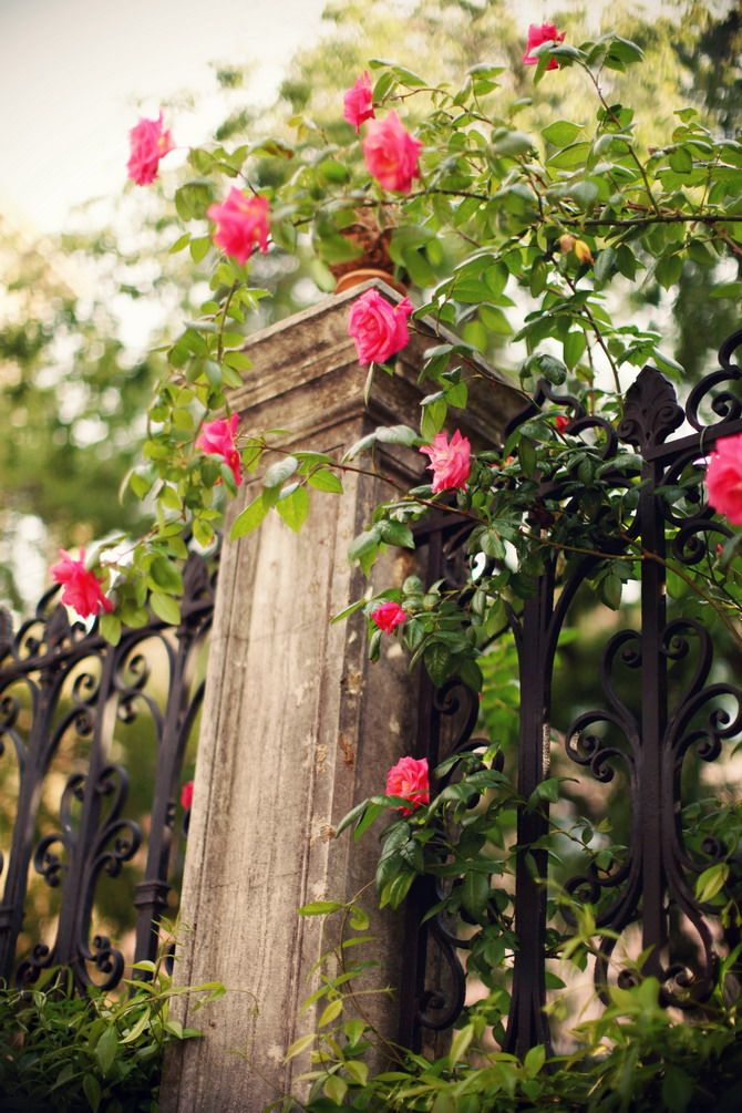 Fence embellished with beautiful intertwined rose vines!