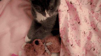 "gifsboom: ""Lindo Gatito le Encanta Abrazar a Su osito de Peluche. [video] [Kitty Cat Bienaventuranza] """