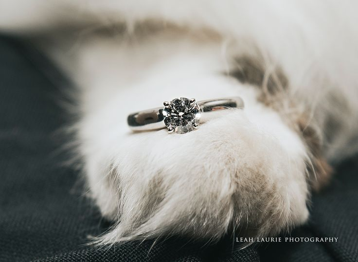 pets and wedding photography