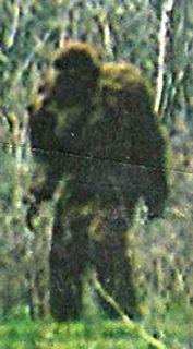 Bigfoot picture from Utah. Hahahahahaha!!! I love it! Great costume!